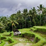 Photo Journal: Village Life – The Real Bali