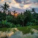 Image Of The Day: Brilliance Of Ubud