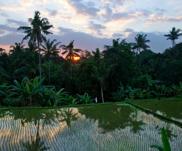 The sun setting over the rice fields of our balcony in Ubud, Bali, Indonesia