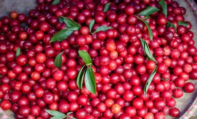 A basket of bright red cherries.